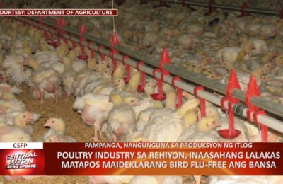 Poultry industry sa Central Luzon, inaasahang lalakas matapos maideklarang bird flu-free ang bansa