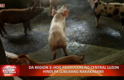 DA Region 3: Hog producers ng Central Luzon hindi pa lubusang nakakabawi