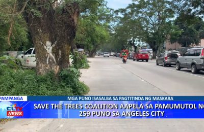 Save The Trees Coalition aapela sa pamumutol ng  259 puno sa Angeles City