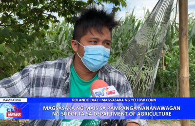 Magsasaka ng mais sa Pampanga nanawagan ng suporta sa Department of Agriculture | Pampanga News