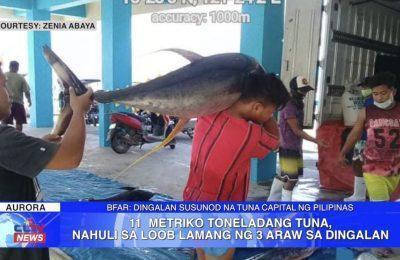 11 metriko toneladang tuna, nahuli sa loob lamang ng 3 araw sa Dingalan | Aurora News