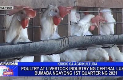 Poultry at livestock industry ng Central Luzon bumaba ngayong 1st Quarter ng 2021 | Central Luzon News