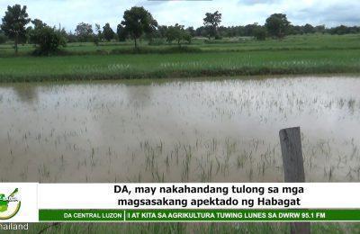 DA, may nakahandang tulong sa mga magsasakang apektado ng Habagat   Agri-Balita Central Luzon