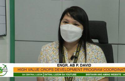 Mga programa sa kabataan, tampok sa DARFO-3 High Value Crops Development Program | Agri-Balita Central Luzon
