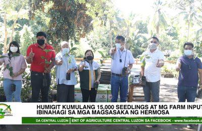 Humigit kumulang 15,000 seedlings at mga farm inputs, ibinahagi sa mga magsasaka ng Hermosa | Agri-Balita Central Luzon