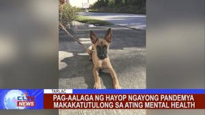 Pag-aalaga ng hayop ngayong pandemya makakatutulong sa ating mental health